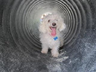 dog tunnel